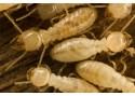 Produit de préservation du bois fongicide, insecticide, termiticide, préventif - XYLUX PRIM