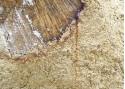 Sous couche isolante en phase aqueuse pour bois tanniques - BATITANIN